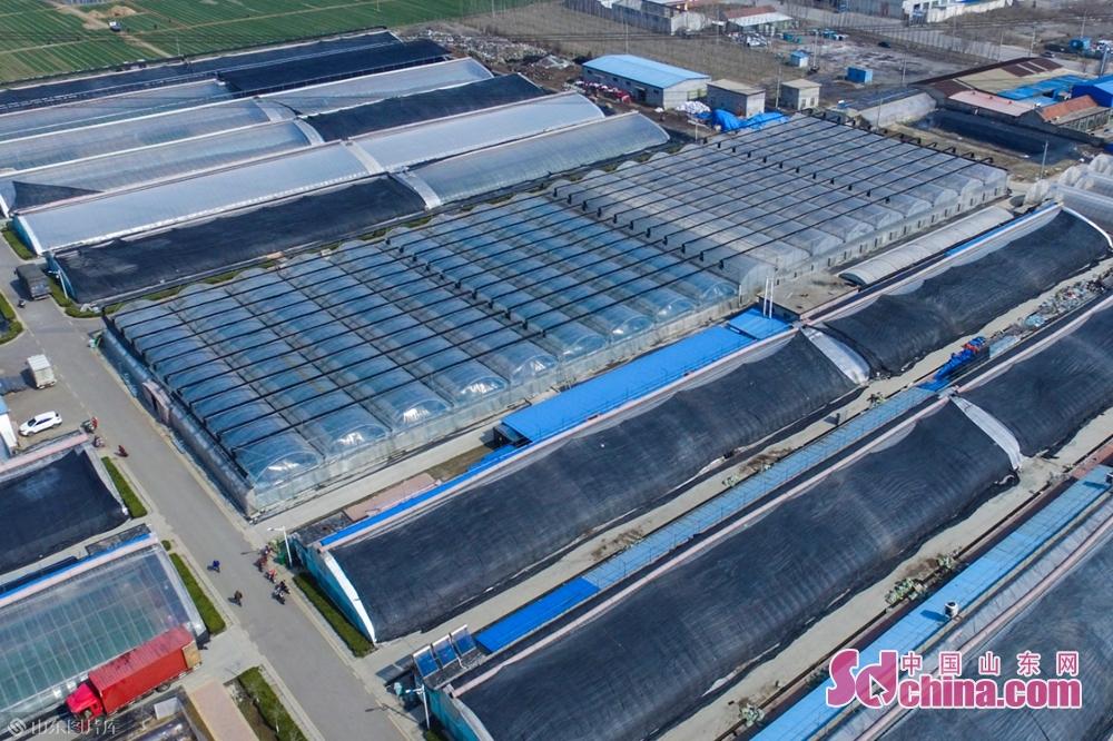 <br/>山东伟丽种苗有限公司厂区。