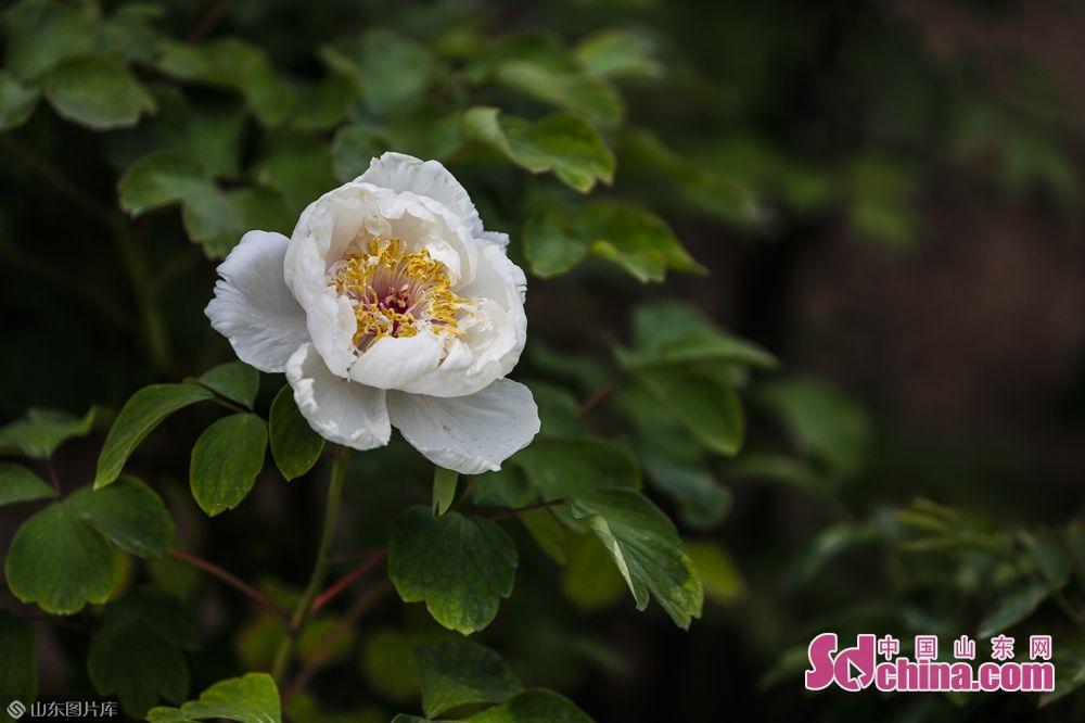 <br/>   园中花香四溢,在绿叶的簇拥下各色硕大的花朵昂扬向上。(摄影 毕冉)