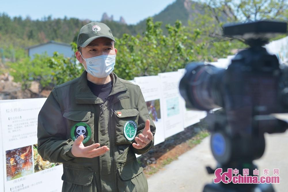 <br/>  4月17日,在山东省青岛市城阳区野生动植物保护协会科普基地,志愿者现场录制云科普环境保护知识。<br/>