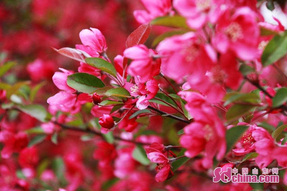 四月は春が濃くて、華やかな時期である。<br/>
