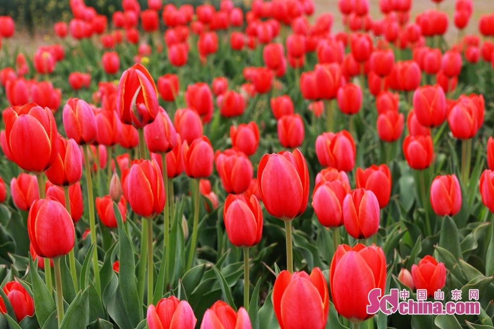 良い気持ちを持って、一緒にお花見に来ましょう。<br/>