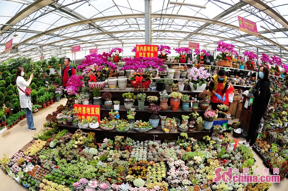 山東省青島市崂山区における枯桃花卉取引センターで、市民が花を背景に写真を撮っている。<br/>