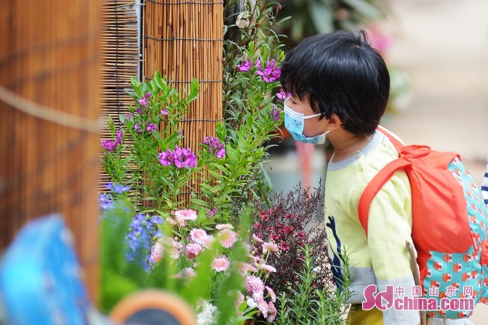 山東省青島市崂山区における枯桃花卉取引センターで、子供が花見で香りを楽しんでいる。<br/>