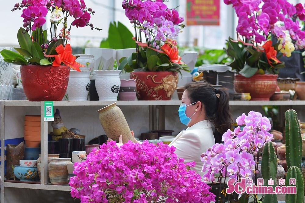 山東省青島市崂山区における枯桃花卉取引センターで、市民が花瓶を購入した。<br/>