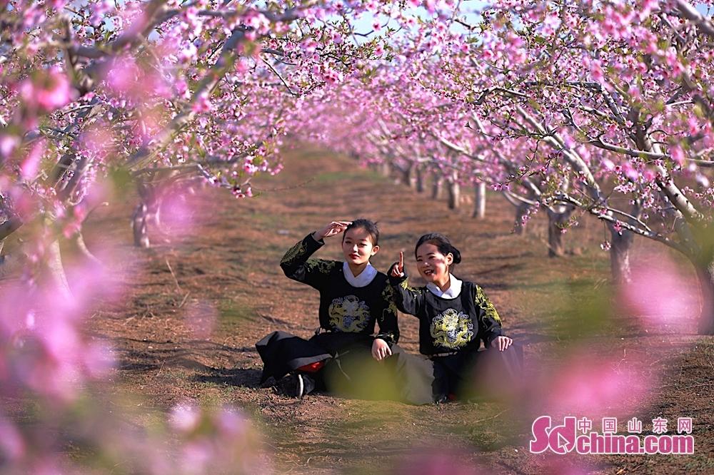 <br/>  一朵朵、一簇簇的粉色桃花开满枝头,像片片云霞染红大地。<br/>