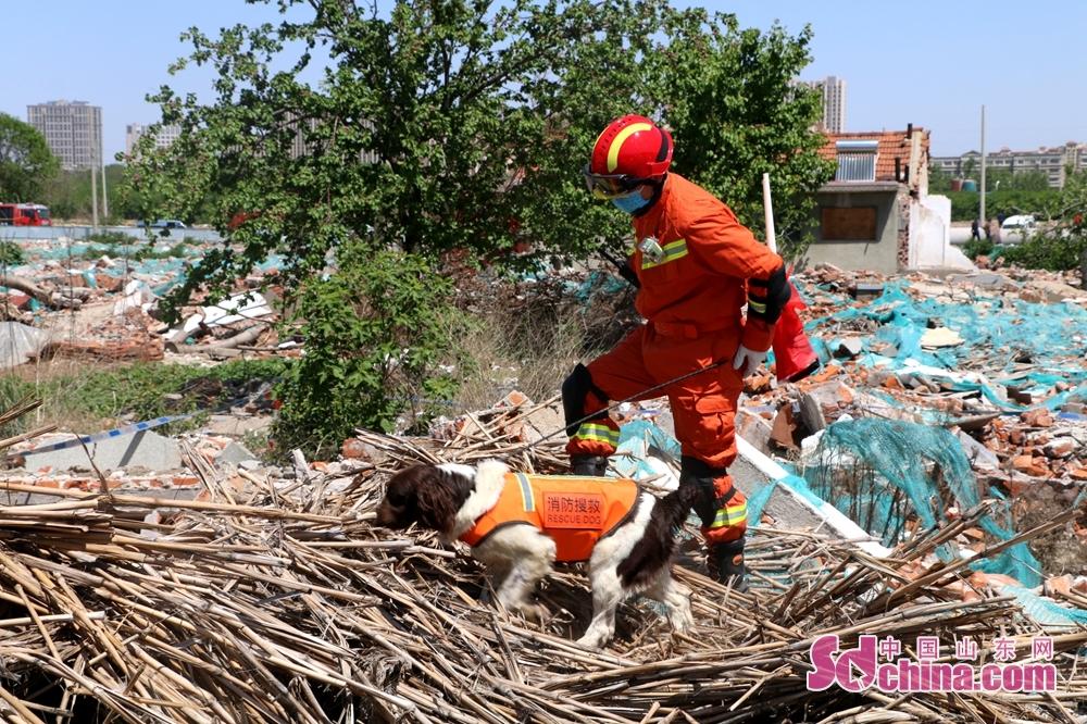 <br/>  5月12日上午,青岛市举行2020年地震应急救援综合演练。演练假设2020年5月12日6时45分,即墨区发生6.0级地震,造成人员伤亡,震中附近地区房屋遭到不同程度损坏,老旧房屋倒塌严重,通信中断,城市基础设施多处受损,现场尚有多人被困。<br/>