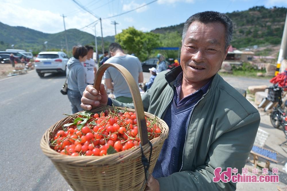 앵두를 따는 시절에 들어가면, 청도시 성양구 석복진거리 면화촌의 촌민이 관광객에게 방금 딴 붉은 앵두를 전시하고 있다.<br/>