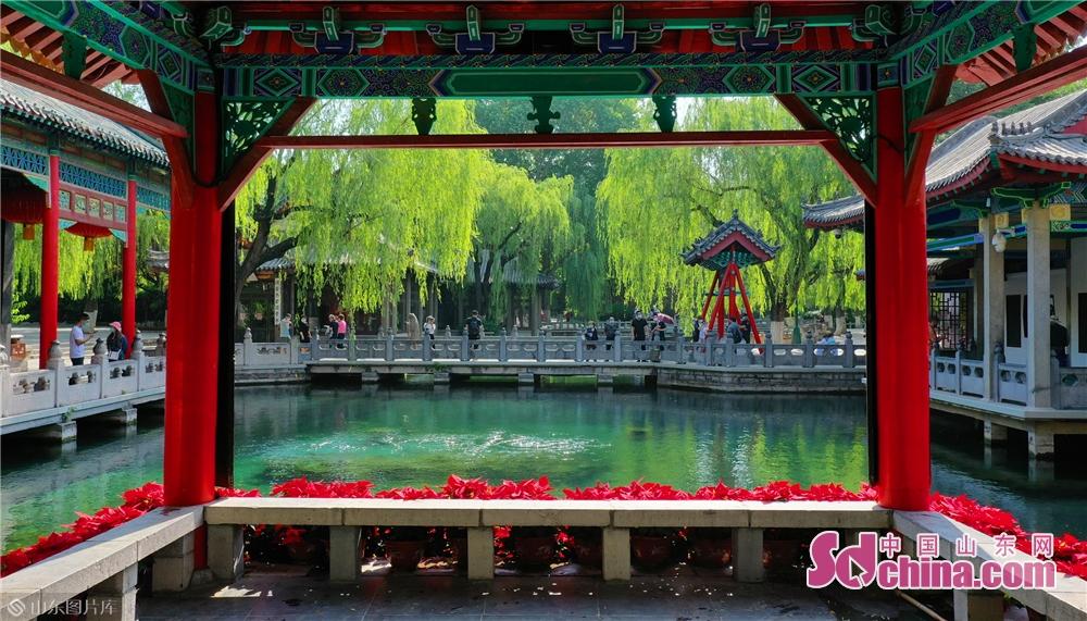 中国山東網