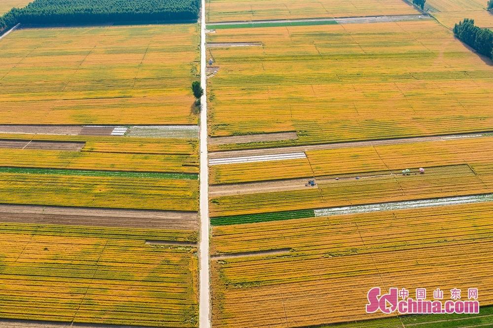 <br/>  山东省是粮食生产大省,粮食总产全国第三,小麦产量全国第二,是保障全国粮源供应的重要&ldquo;根据地&rdquo;。