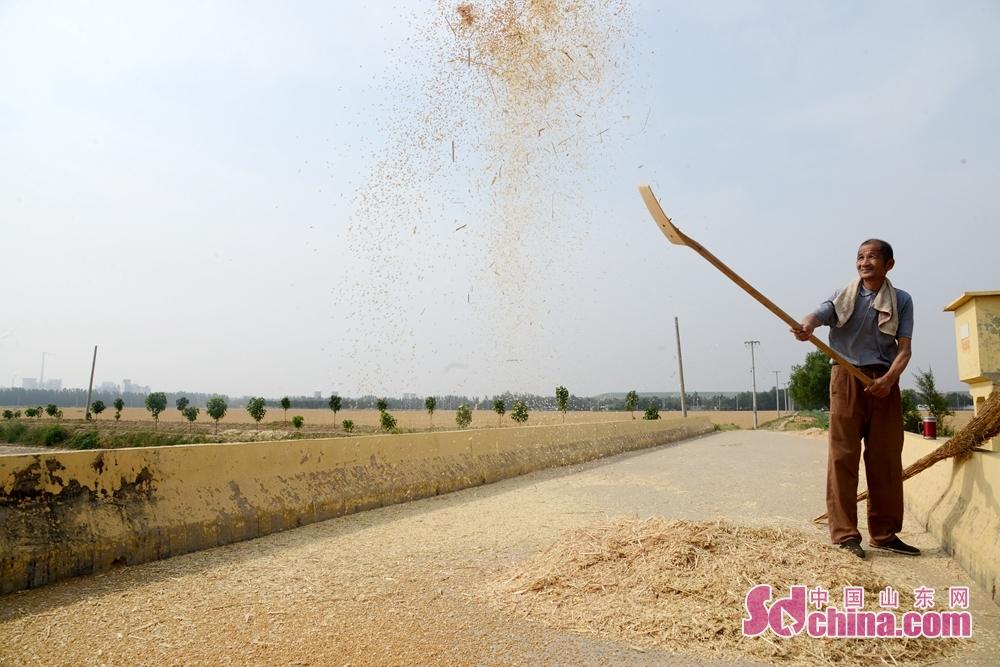 <br/>  山东省茌平区温陈街道王甲村村民正在收割小地块麦子。<br/>