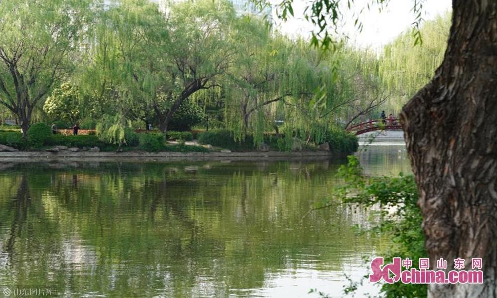 水面初平云脚低,绿杨阴里菏泽堤
