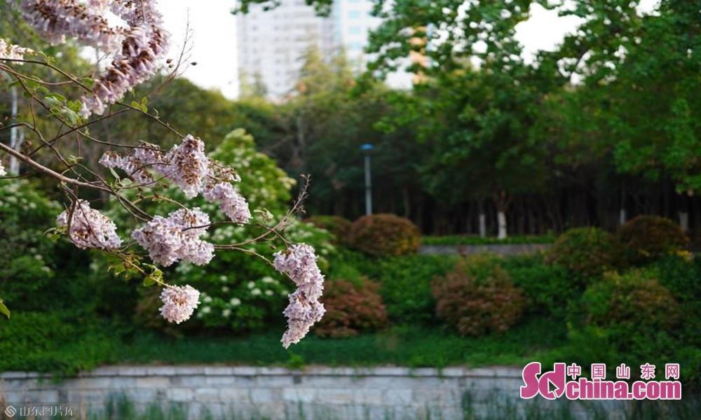 蓦然回首春色盈动,绿意盎然花开枝头