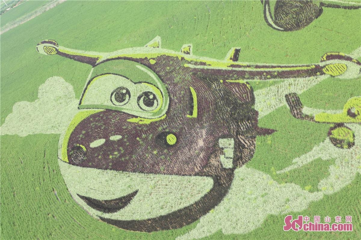 このほど、山東省東営垦利区永安鎮で稲を使って大地に描かれる稲絵の制作が始まった。稲絵の敷地面積は240ムー、現在山東省最大の稲絵である。6色の稲で作り、高速列車、鴿、雲などの図がある。<br/>  永安鎮の稲絵創意基地の敷地面積は13000ムーあり、稲絵、観光タワー、観光客センター、稲文博館、稲の迷宮など19のプロジェクトある。現在、観光タワー、駐車場などの工事は完成し、観光客センターは2020年7月末までに完成する予定。<br/>