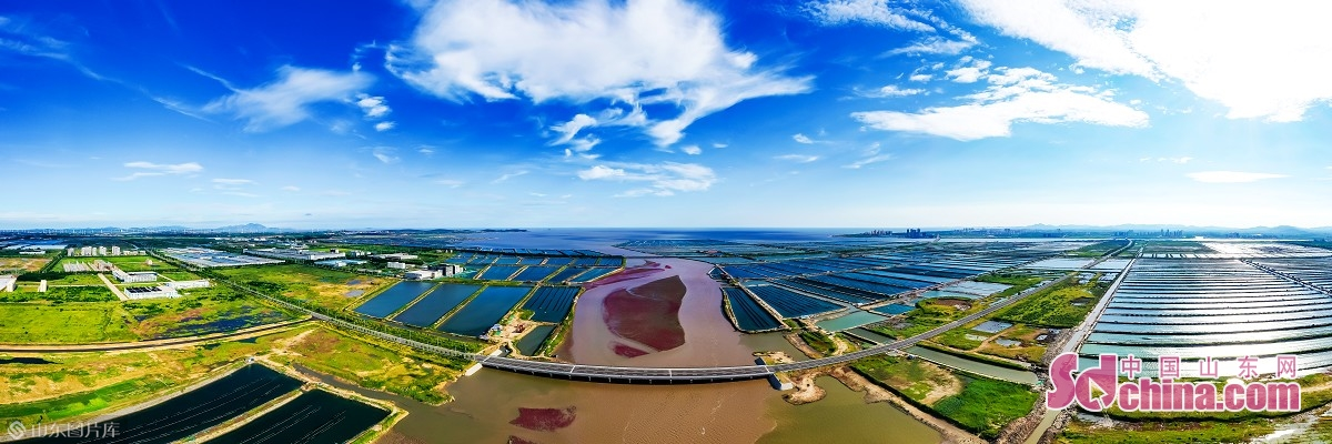 盛夏时节的南海新区,热潮涌动,跃动着蓬勃生机与活力,南海新区这座令人无限期待的新区新城,正以&ldquo;每天不一样&rdquo;的速度拔地而起,日夜精进地将蓝图绘就成令人振奋的现实,完成了盐碱滩上的神奇嬗变。(摄影 张仁玉)<br/>