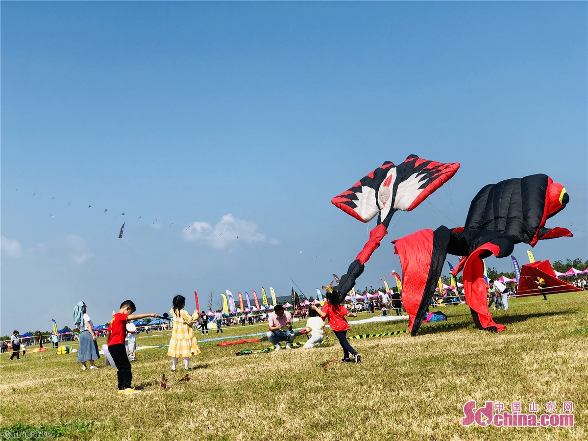 Kite lovers fly kites at Binhai International Kite Flying Field in Weifang, east China&rsquo;s Shandong province on Sept. 26, 2020. The 37th Weifang International Kite Festival opened in Sept. 26, 2020 and will last till Oct. 8, 2020. (Sdchina/Han Beibei, Sun Xiaoru)<br/>
