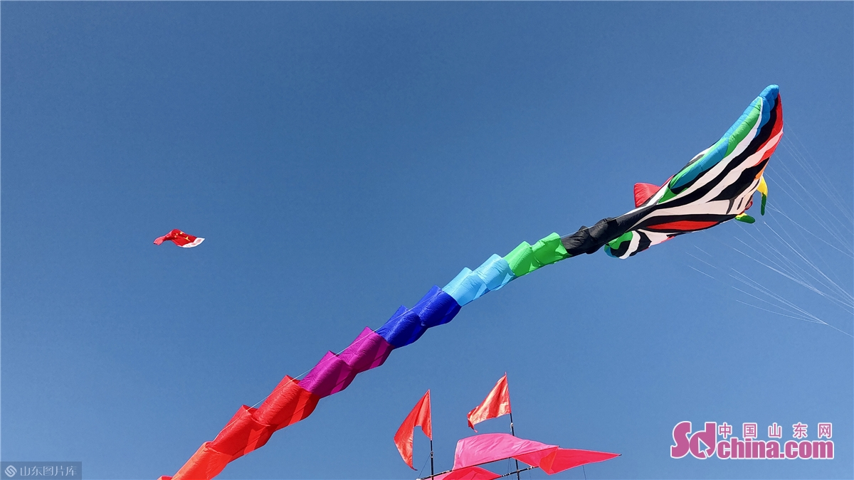 Kites are seen flying in the sky at Binhai International Kite Flying Field in Weifang, east China's Shandong province on Sept. 26, 2020. The 37th Weifang International Kite Festival opened in Sept. 26, 2020 and will last till Oct. 8, 2020. (Sdchina/Han Beibei, Sun Xiaoru))