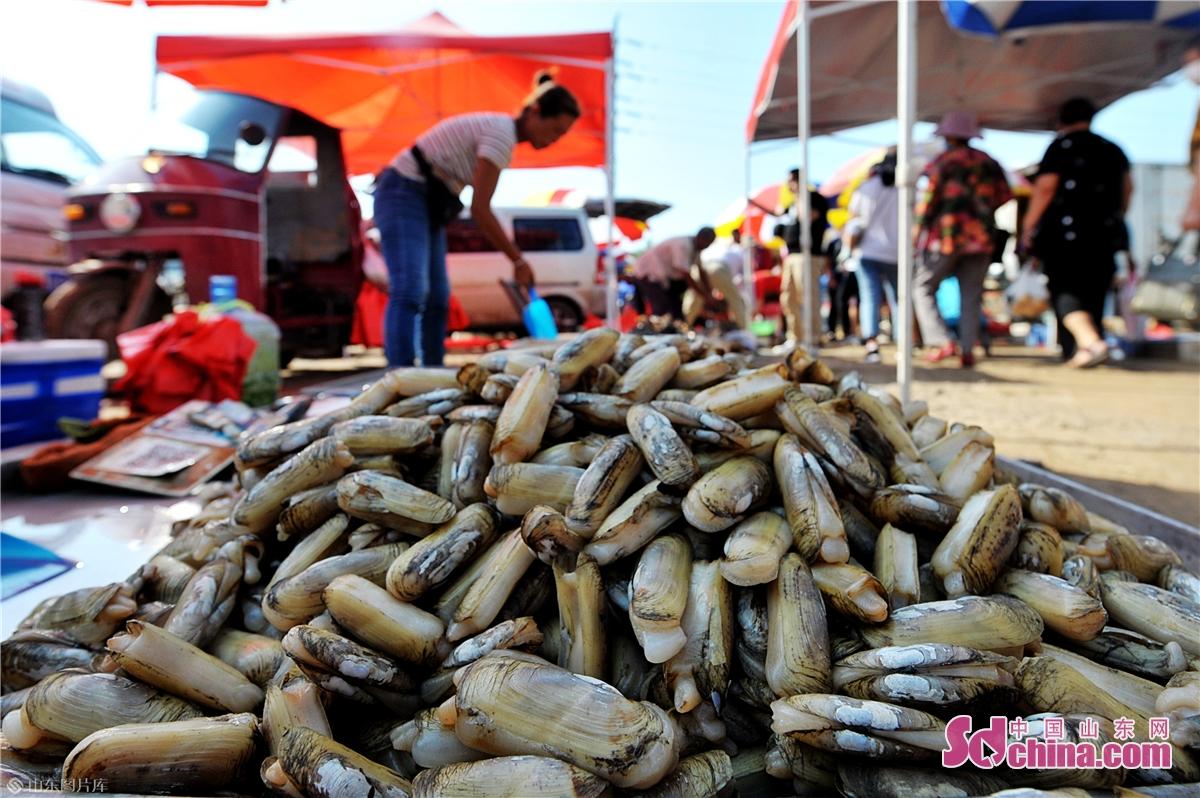 <br/>  2020年9月5日,在青岛市城阳区上马街道乡村大集上,渔民摆放销售鲜活的缢蛏。 (王海滨 摄)<br/>