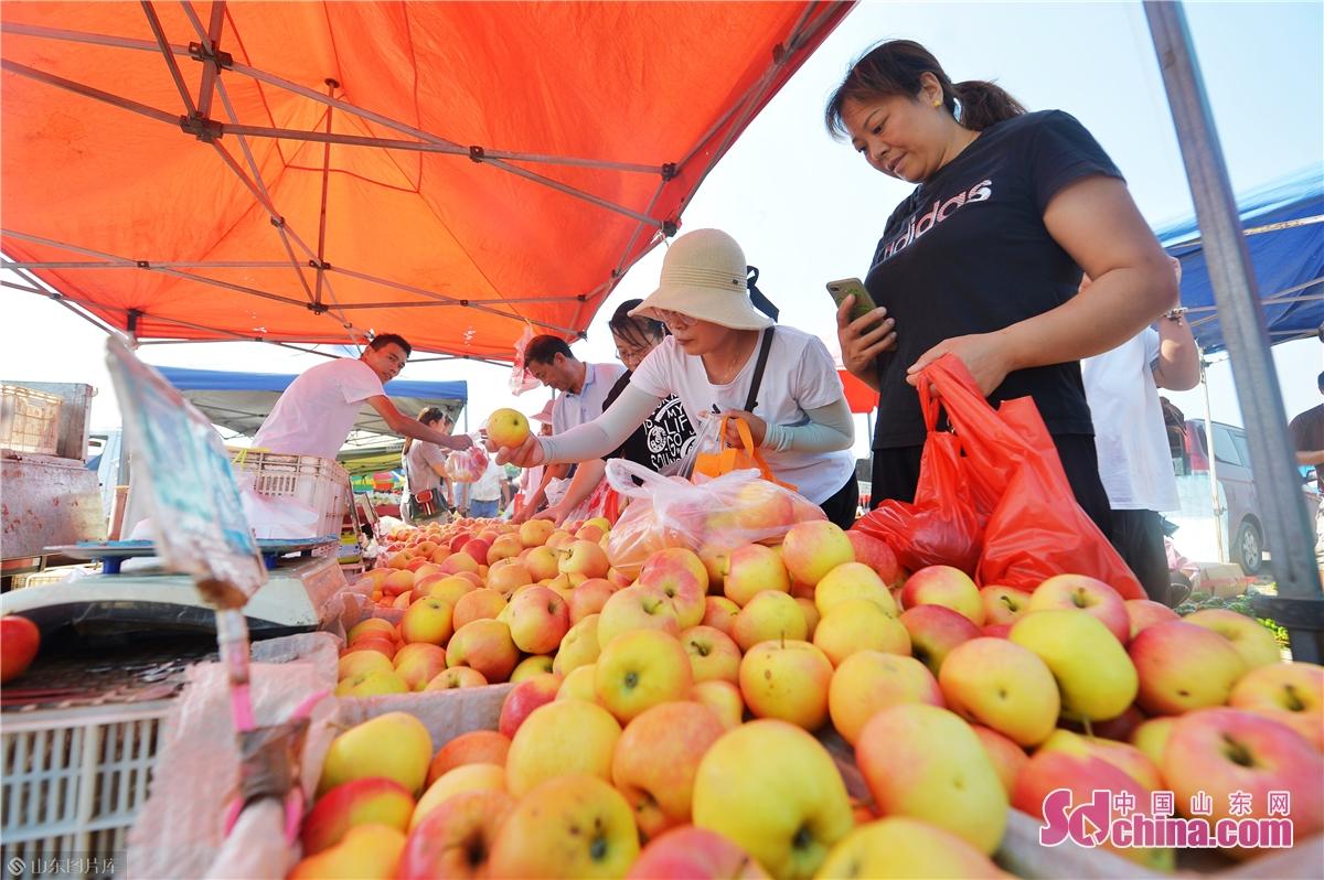 <br/>  2020年9月5日,在青岛市城阳区上马街道乡村大集上,市民前来选购富硒苹果。 (王海滨 摄)<br/>
