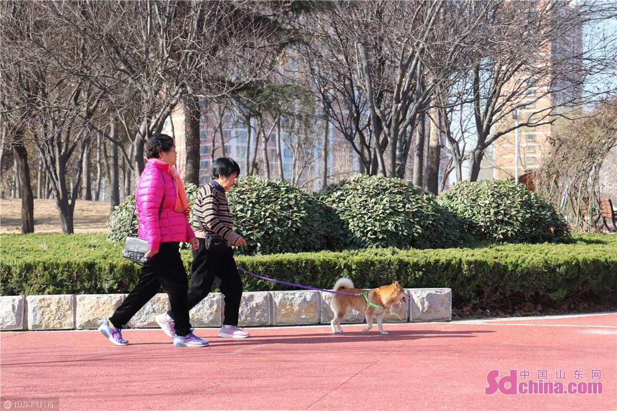 赵王河公园里,市民们和宠物小狗一起散步。<br/>