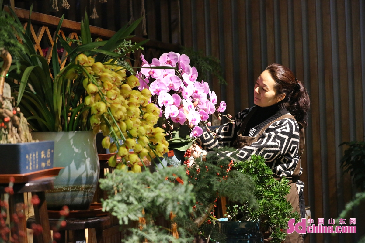 As the flavor of the New Year is getting stronger, a flower in a market in Dongying sees booming business. Many citizens come to buy festive flowers to pray for a prosperous New Year. (Photo by Zhang Zhen)<br/>