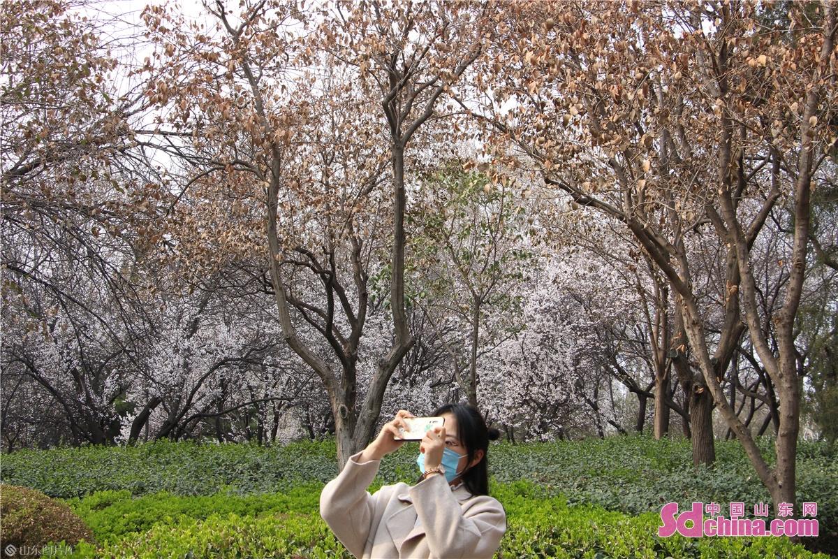 <br/>  游客在公园内拍照留念。<br/>