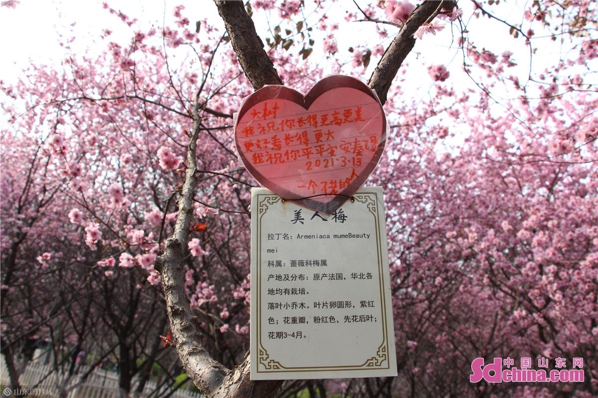<br/>  送给&ldquo;大树&rdquo;的祝福。<br/>