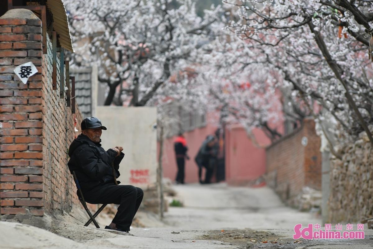 <br/>  在青岛市城阳区夏庄街道少山社区,一位老人在院外休闲赏花。<br/>