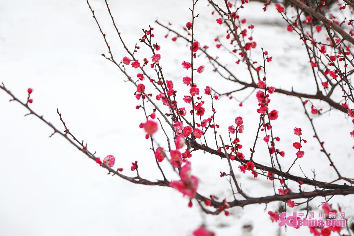 <br/>       也许是春天来得太蹒跚,又或许是冬天迟迟不愿离开。在乍暖还寒的初春,一阵北风,一场春寒。3月1日的凌晨,一场不期然的春雪悄悄撒满了东营的各个角落。(图文 马仁亮)<br/>