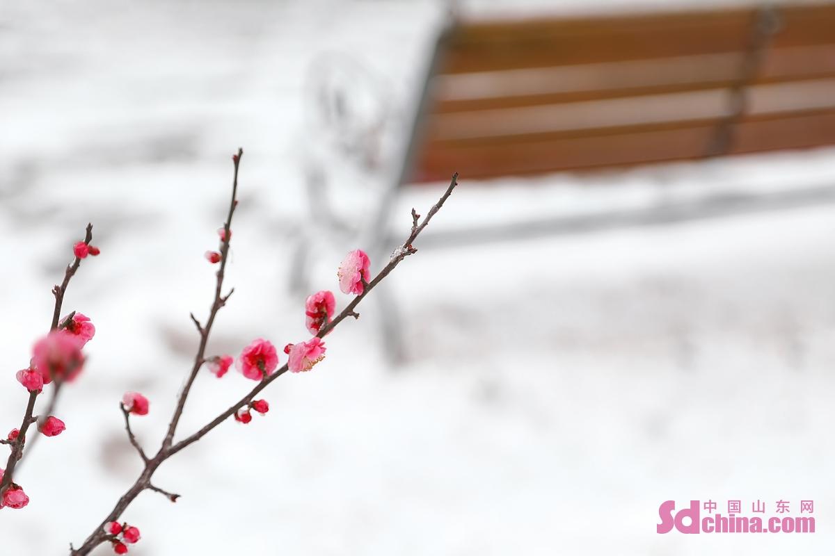<br/>       也许是春天来得太蹒跚,又或许是冬天迟迟不愿离开。在乍暖还寒的初春,一阵北风,一场春寒。3月1日的凌晨,一场不期然的春雪悄悄撒满了东营的各个角落。(图文 马仁亮)<br/> <br/>