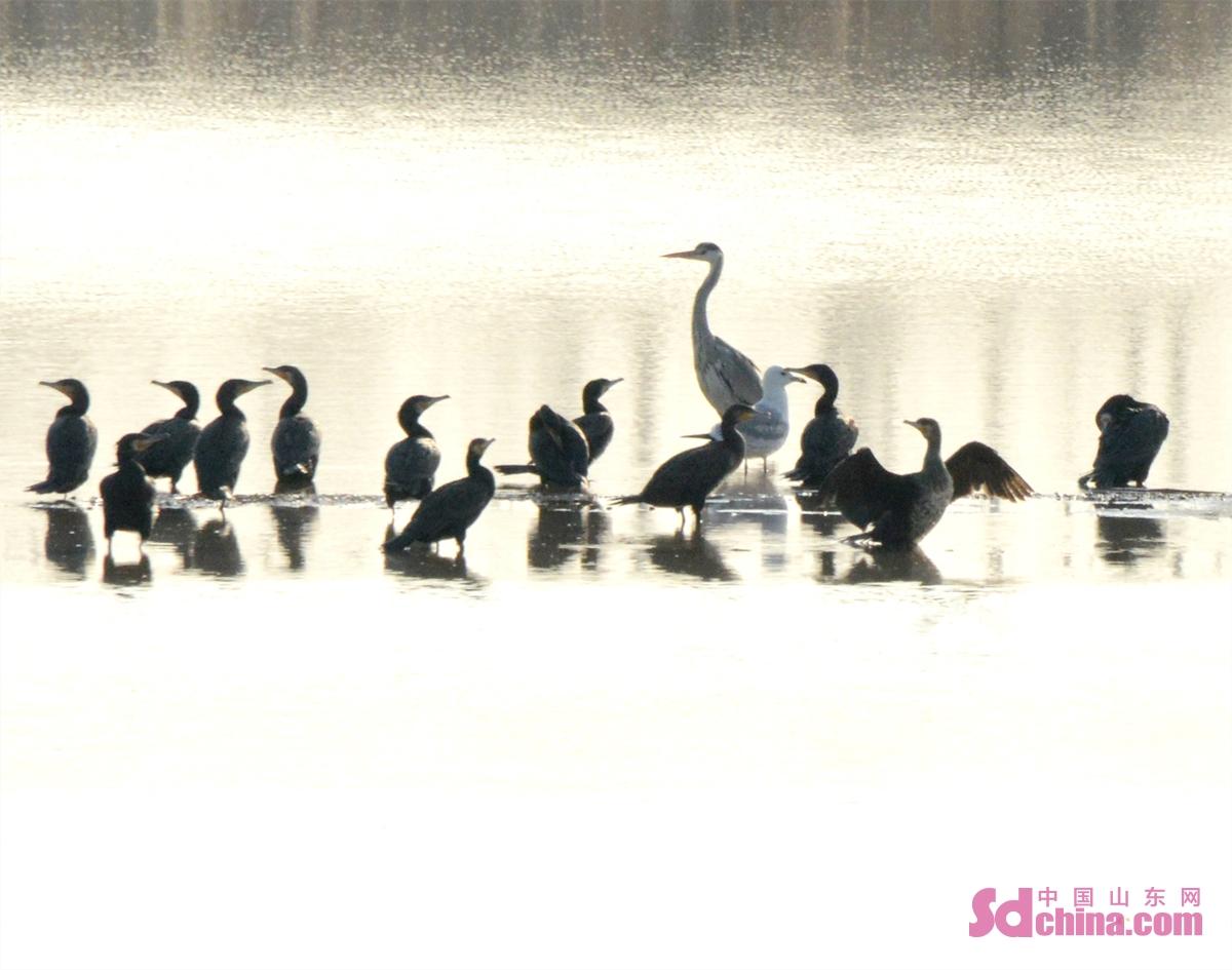 <br/>  图为2021年2月27日,摄于山东省济南市槐荫区玉清湖水库。(史奎华 摄)<br/>  2021年2月27日,位于山东省济南市西部黄河岸边的槐荫区玉清湖水库环湖路的柳树上,一只松鼠在树上玩耍,引来了路人围观,只见可爱的小松鼠在树上自由的上蹿下跳,一会东望望、西看看,在金黄的柳树枝杈间嬉戏玩耍,着实惹人可爱。当日,在玉清湖上栖息的大雁、白天鹅、海鸥等鸟类也给玉清湖增添了灵动色彩。