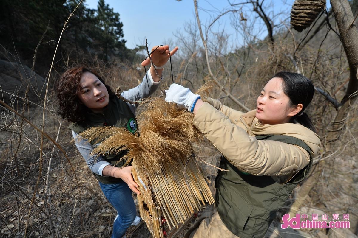 3月8日,青岛市城阳区人大机关的巾帼志愿者在郊外置放鸟巢,为小鸟&ldquo;安家&rdquo;。<br/>