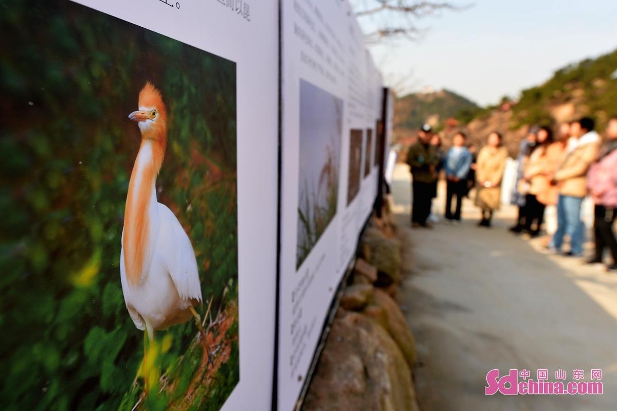 3月8日,青岛市城阳区人大机关的巾帼志愿者在动植物保护站参观鸟类科普。<br/>