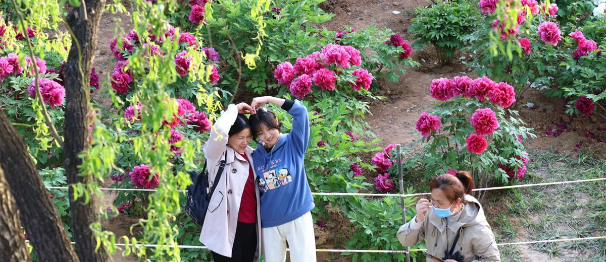 济南:谷雨时节赏牡丹