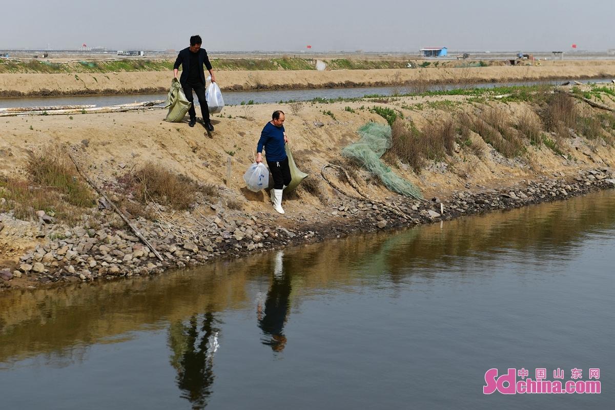 <br/>  养殖户在青岛市城阳区河套街道一处海产养养殖区运送虾苗。