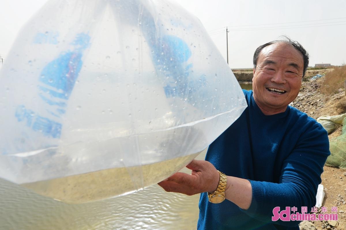 <br/>  在青岛市城阳区河套街道一处海产养殖区,养殖户展示即将投放的虾苗。<br/>