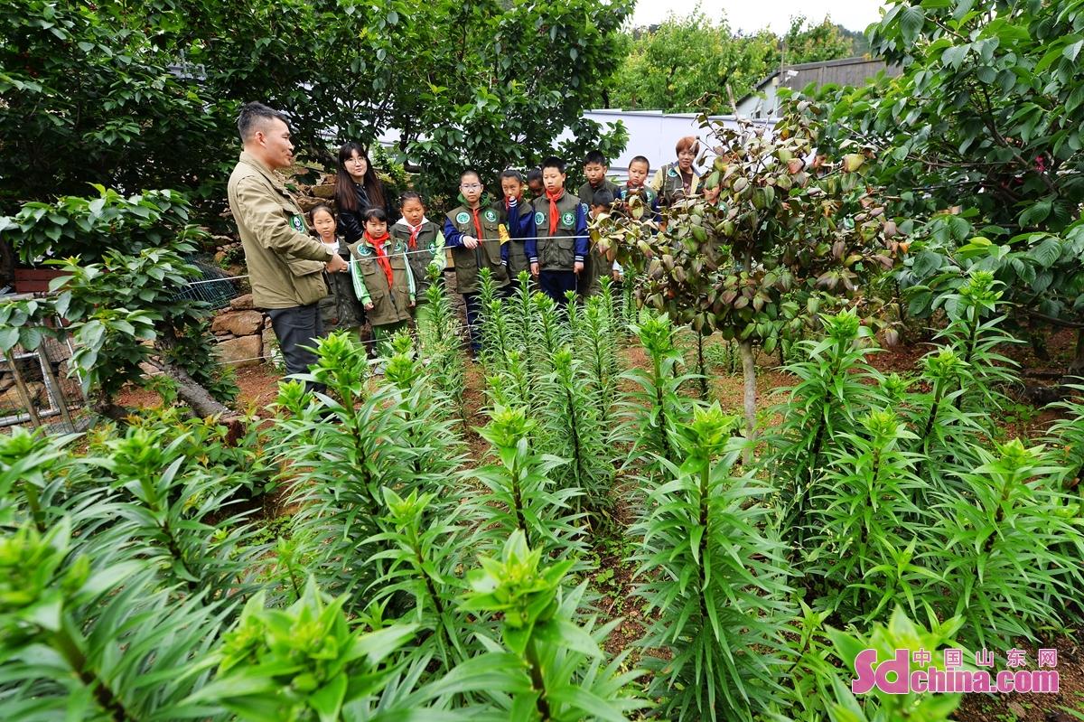 <br/>  科普老师在青岛市城阳区野生动植物保护站百合培育基地向小志愿者们科普濒危植物保护。<br/>