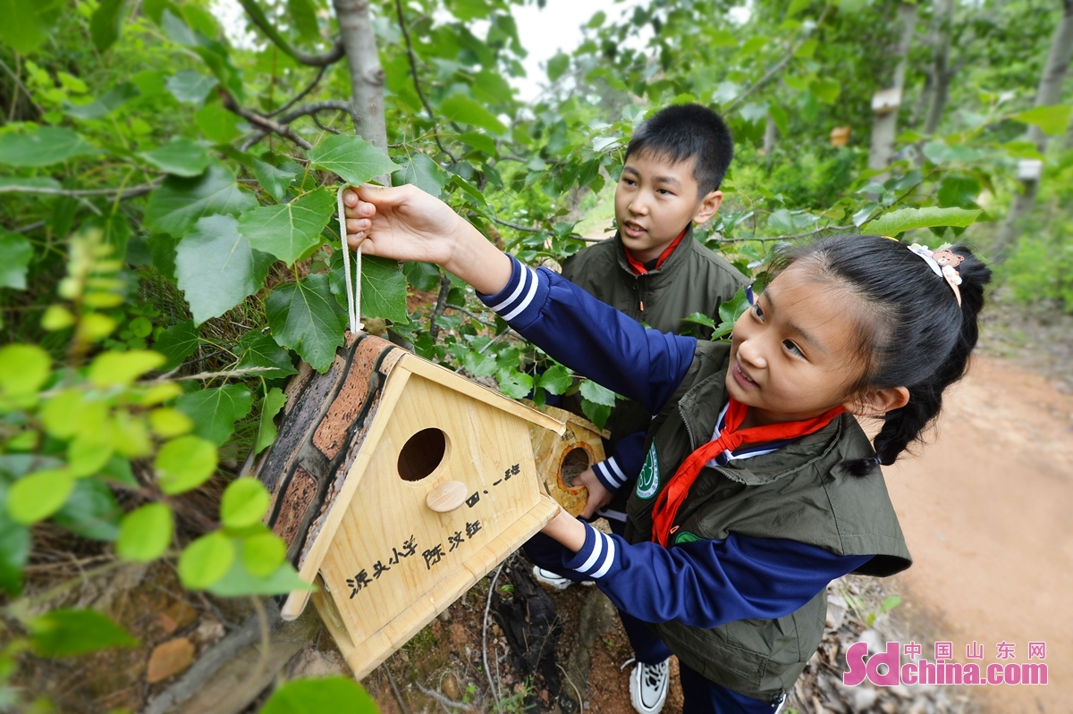 <br/>  来自青岛市市北实验小学的小志愿者在树上悬挂鸟巢,为小鸟安家。<br/>