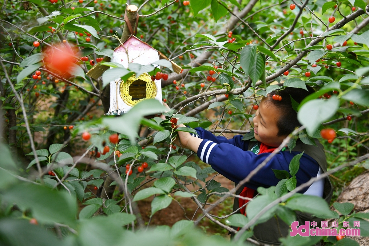<br/>  来自青岛市市北实验小学的小志愿者在树上悬挂鸟巢,为小鸟安家。