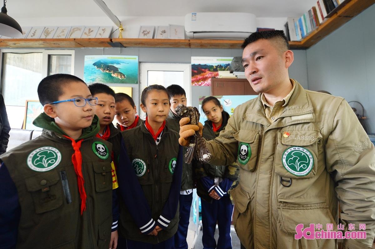 <br/>  在青岛市城阳区野生动植物保护站,科普老师为小志愿者们讲解救助的夜鹰。<br/>