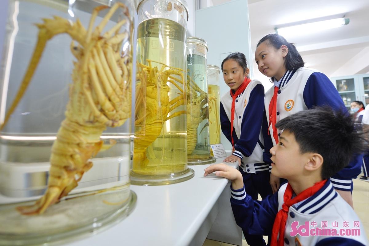<br/>  学生在中科院海洋研究所&ldquo;公众科学日&rdquo;活动上参观龙虾标本。<br/>