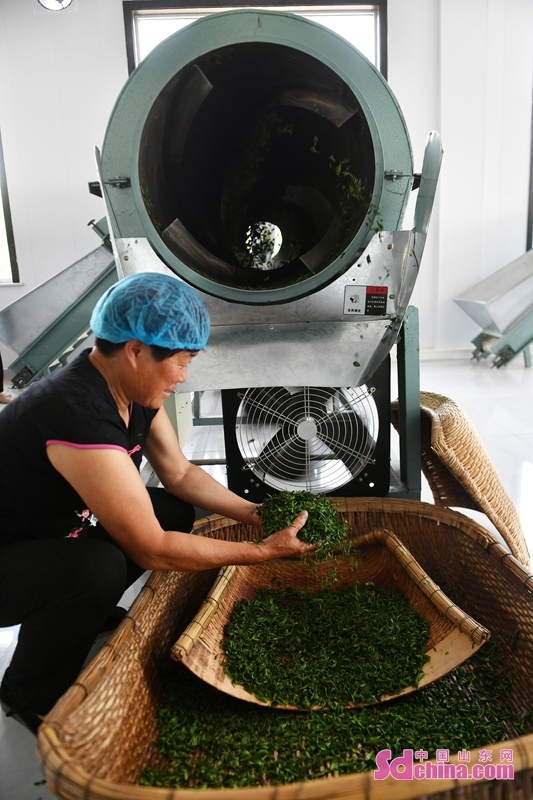 <br/>  泰山脚下的村民在茶厂烘炒茶叶。<br/>