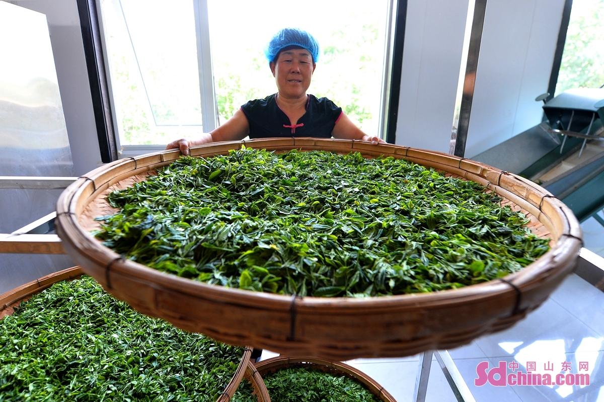 <br/>  当下正是泰山市泰山区省庄镇各村的女儿茶、甜杏采摘季,十里乡村茶果飘香。近年来,当地建立茶、果核心种植基地,推动升级文旅服务体系,打造特色产业助推乡村振兴。<br/>