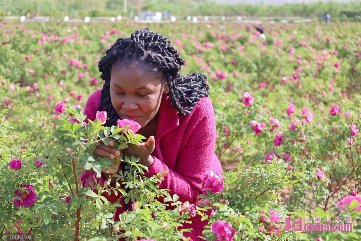 <br/>  &ldquo;这么多玫瑰品种,我从前都没见过,真的太美了!&rdquo;来自赞比亚的特瑞娜(Somba Trina Samakari)连连赞叹。<br/>