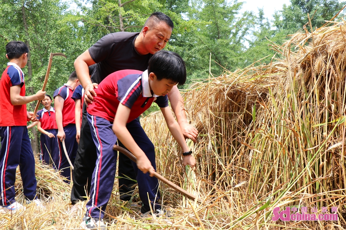 <br/>  いまは農忙期で、山東省郯城県勝利鎮ある小学校は畑で授業を行い、生徒たちの労働授業の時間を利用して、農業知識を伝授し、農業活動を参加させ、農民の辛さを体験させる。<br/>