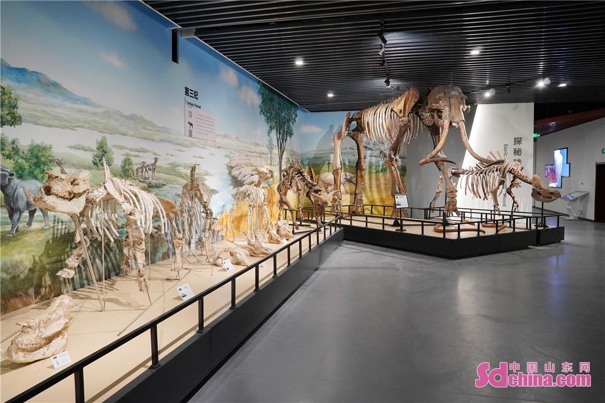 <br/>     第一层的主题是远古精灵,主要展示化石及矿物标本。<br/>