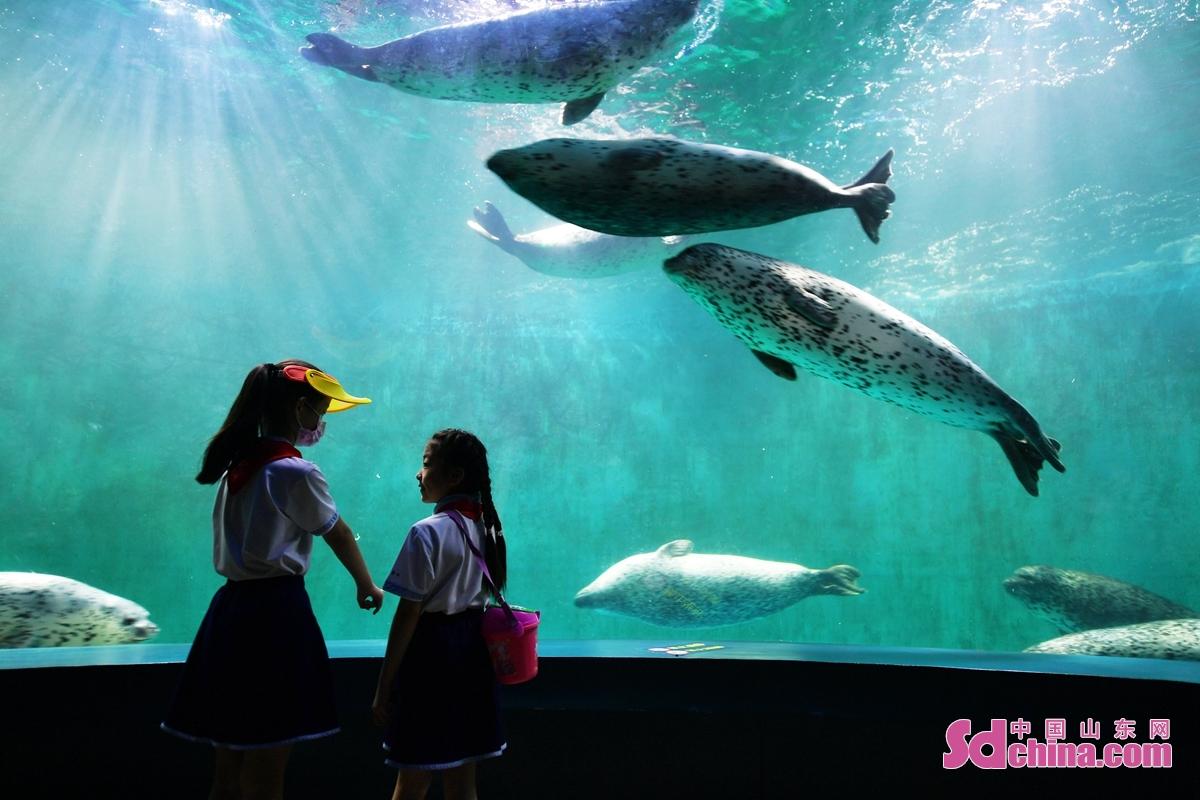 <br/>  学生在&ldquo;海底世界&rdquo;近距离观看海豹表演。<br/>