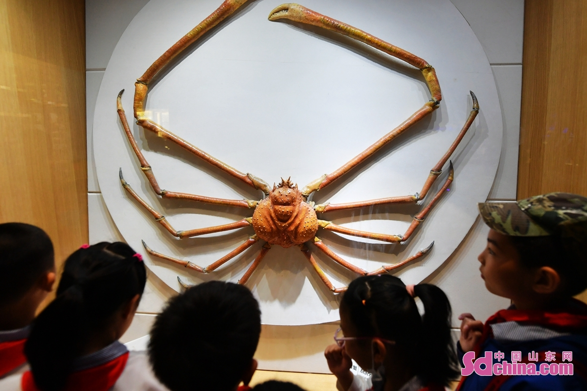 <br/>  学生在&ldquo;海底世界&rdquo;观看陈列的巨螯蟹标本。<br/>