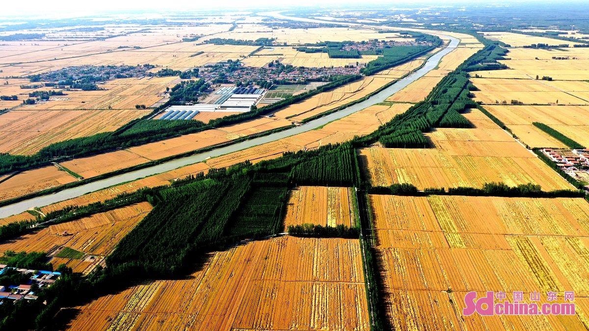 <br/>  聊城市茌平区徒骇河畔、马颊河两岸即将成熟的小麦,把大地点缀的非常美丽。<br/>