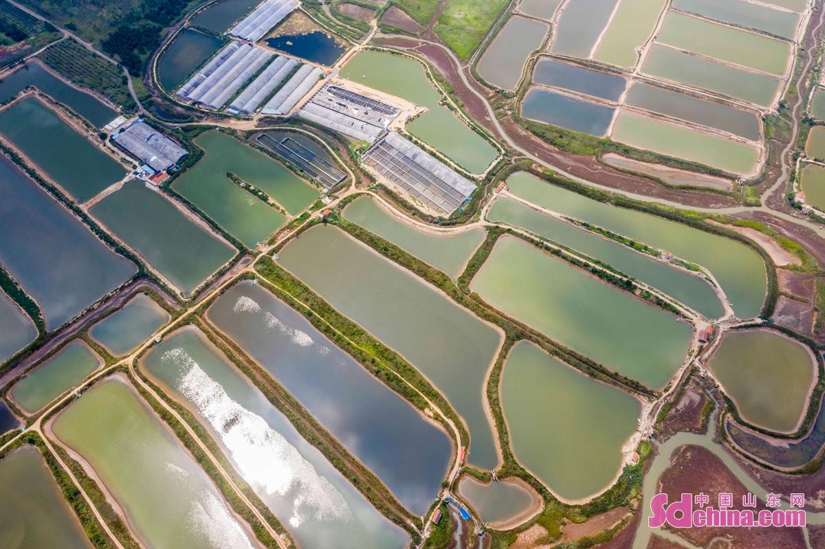 <br/>  光の下で、エビ・カニ養殖水田が色どりで綺麗だ。<br/>