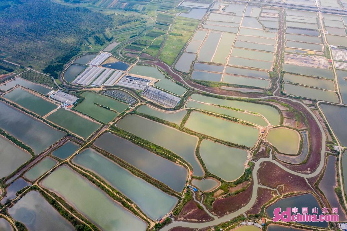 <br/>  五河口エビ・カニ養殖水田は当地の農民の主要収入の源となった。<br/>